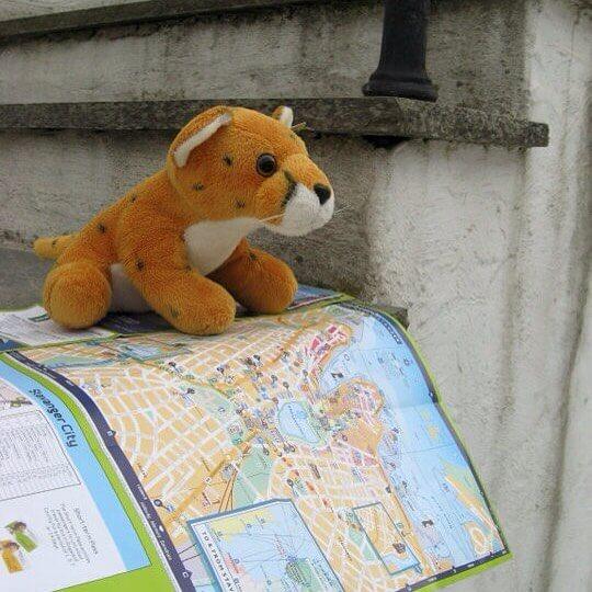 Fluffy moet even op de kaart kijken in Stavanger, Noorwegen