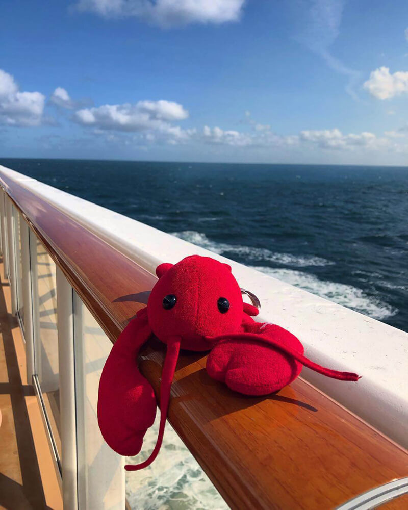 Lobster plushie Pinchie hasn't lost his love for the sea