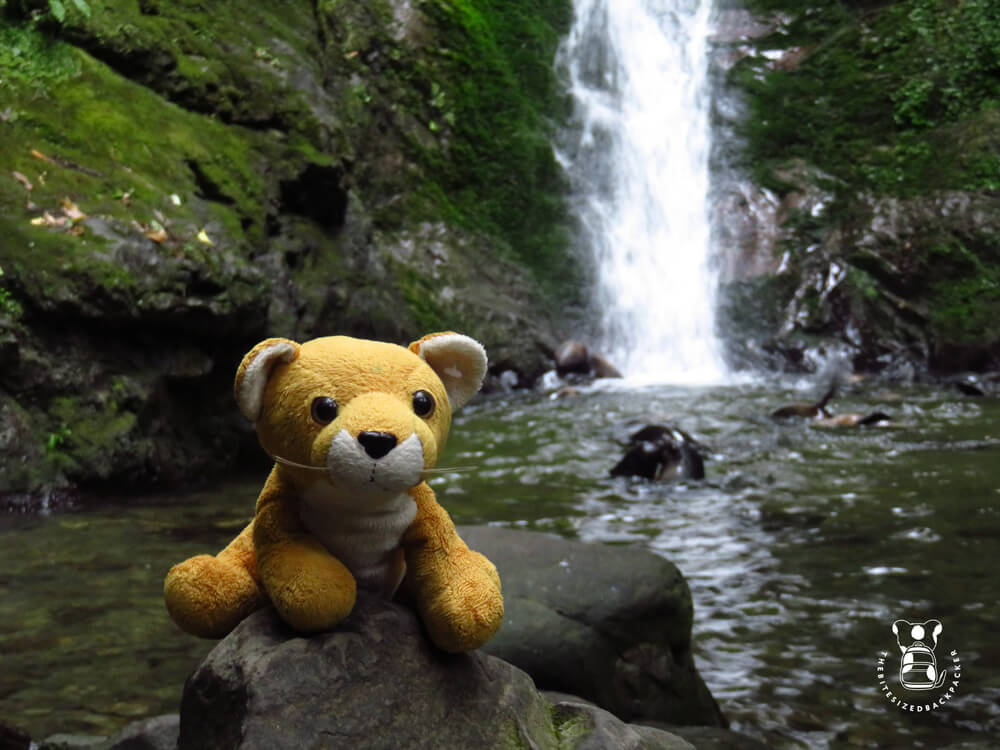 Fluffy at a waterfall in Kaikoura