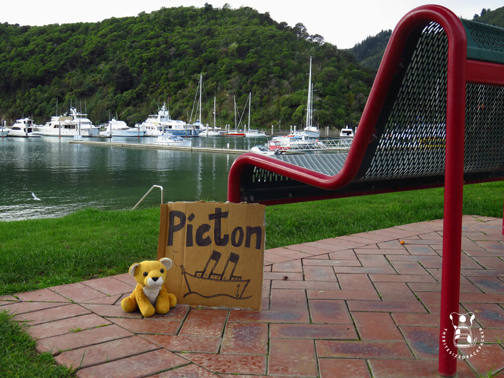 Fluffy in Picton