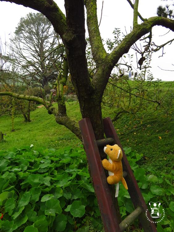 Fluffy in a Garden in Hobbiton