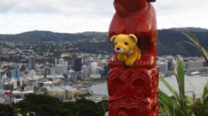 Fluffy on Mount Victoria in Wellington (F)