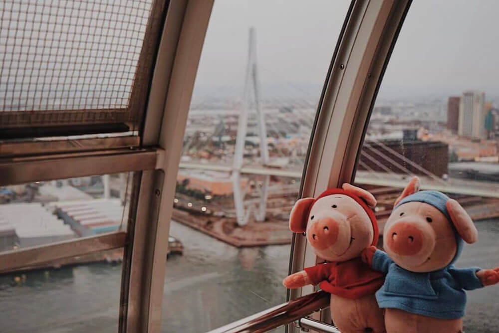 Pig plushies Spam and Jumbo enjoy the view