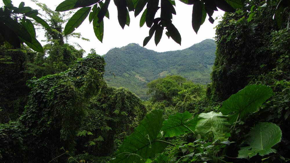 The jungles of Laos