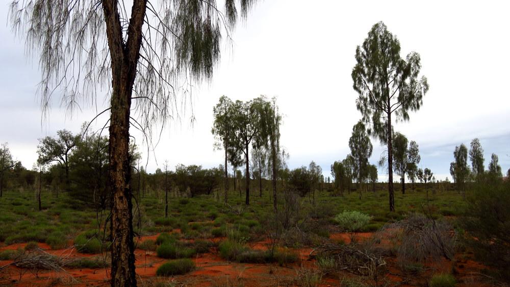 De Australische Outback