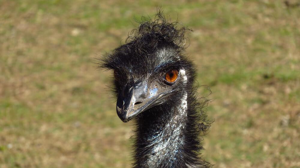 Emoes inspireerden het werk van artiest John Murray